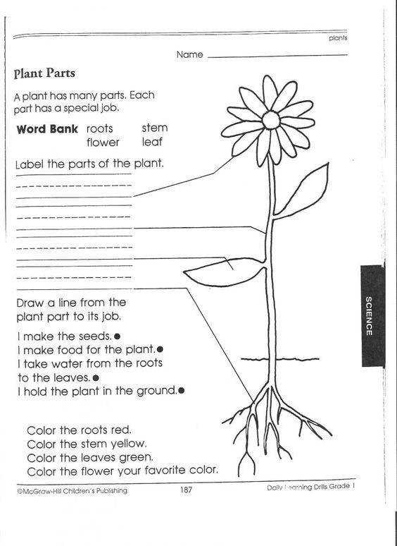 4th grade science first and body parts on pinterest worksheets skeleton dont have acrobat reader