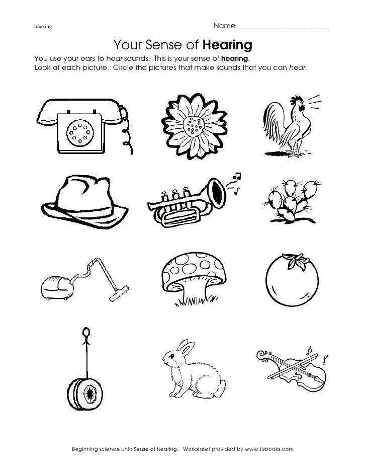 5 senses worksheets