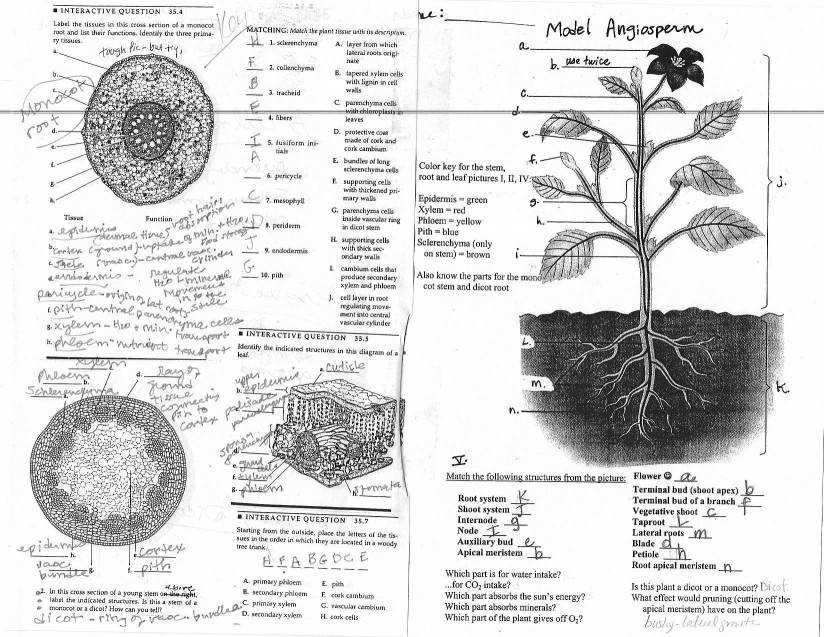 Flower Structure Coloring Worksheet With Flower Anatomy Diagram with animal anatomy and physiology worksheets basic for