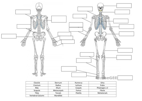 Ideas of Anatomy And Physiology Skeletal System Worksheets Also Sheets