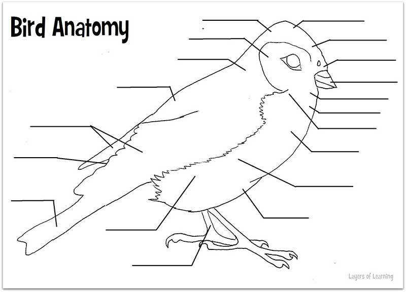 Bird anatomy worksheet