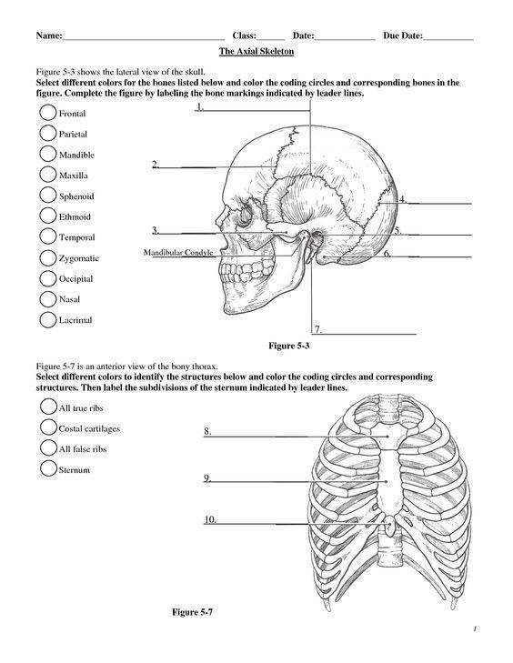 anatomy labeling worksheets Google Search