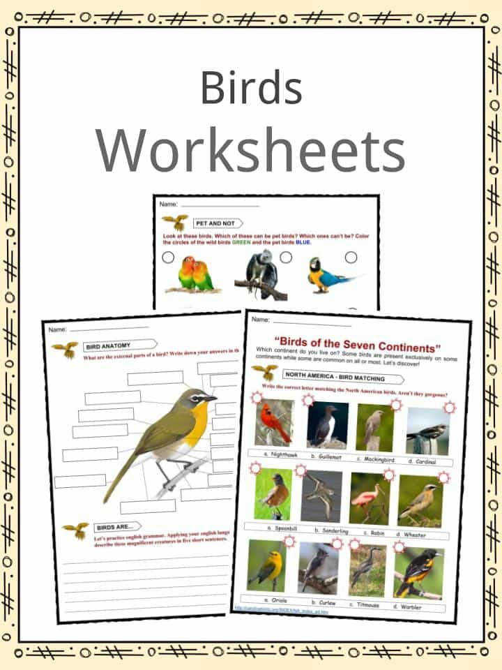 Bird Facts & Worksheets