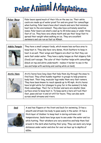 Collection of Solutions Animal Adaptations Worksheets For Your Download Resume