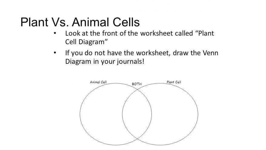 Plant Vs Animal Cells Look At The Front Worksheet Called Cell Diagram 150 Marvellous Coloring