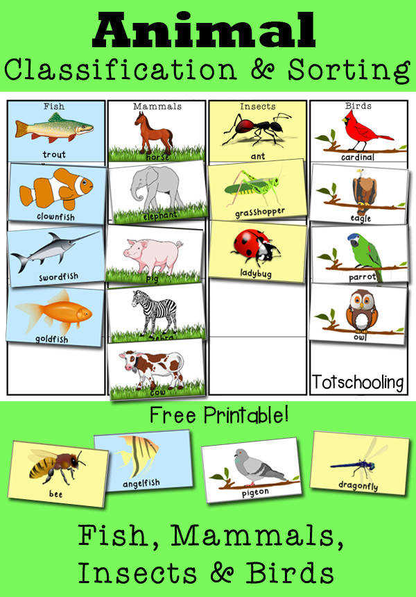 Animal Classification and Sorting Activity