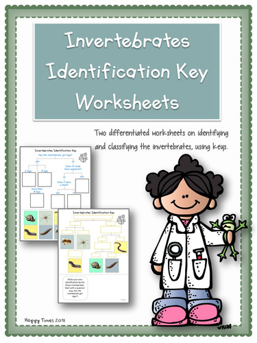 Invertebrate Animals Classification Identification Key Worksheets by hoppytimes Teaching Resources Tes