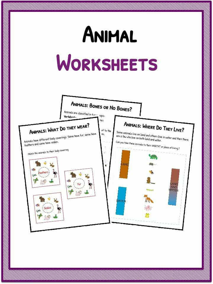 Download the Animal Worksheets
