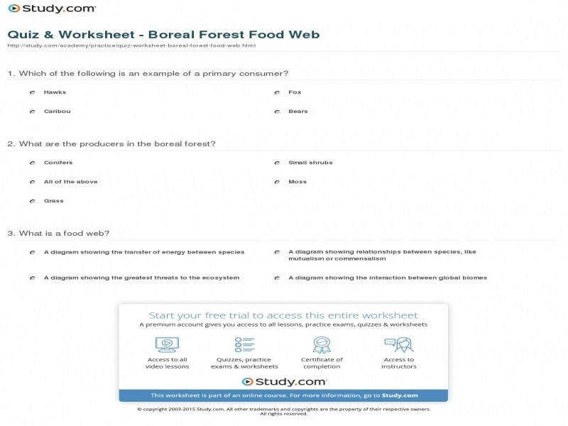 """9 photos of the """"Food Chains And Webs Worksheet Answers"""""""