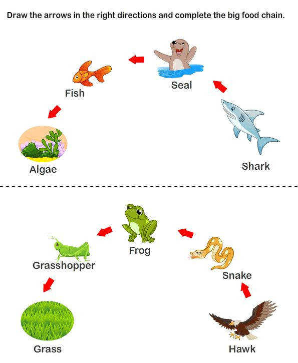 Week 2 Consumers and Food Chain Food Chain Worksheets for young kids