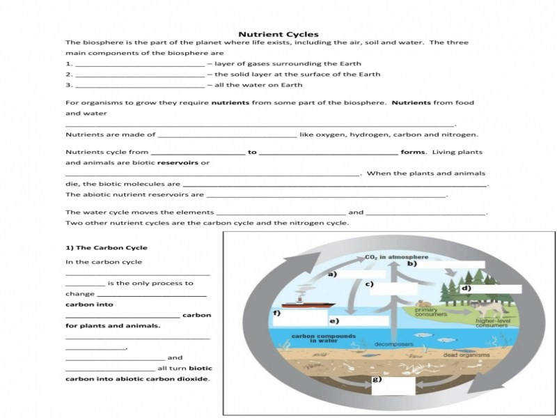 Nutrient Cycles Water Cycle Answers Guillermotull