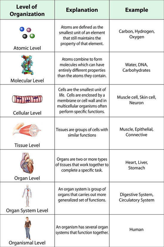 biological classification pogil answer key Biological Classification Worksheet | Homeschooldressage.com