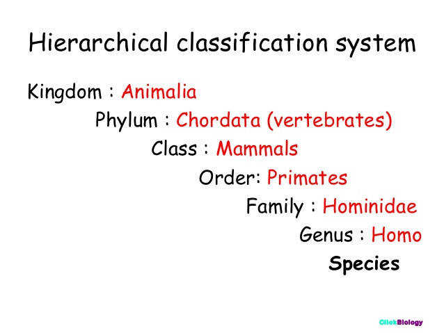 Biology classification worksheet answers