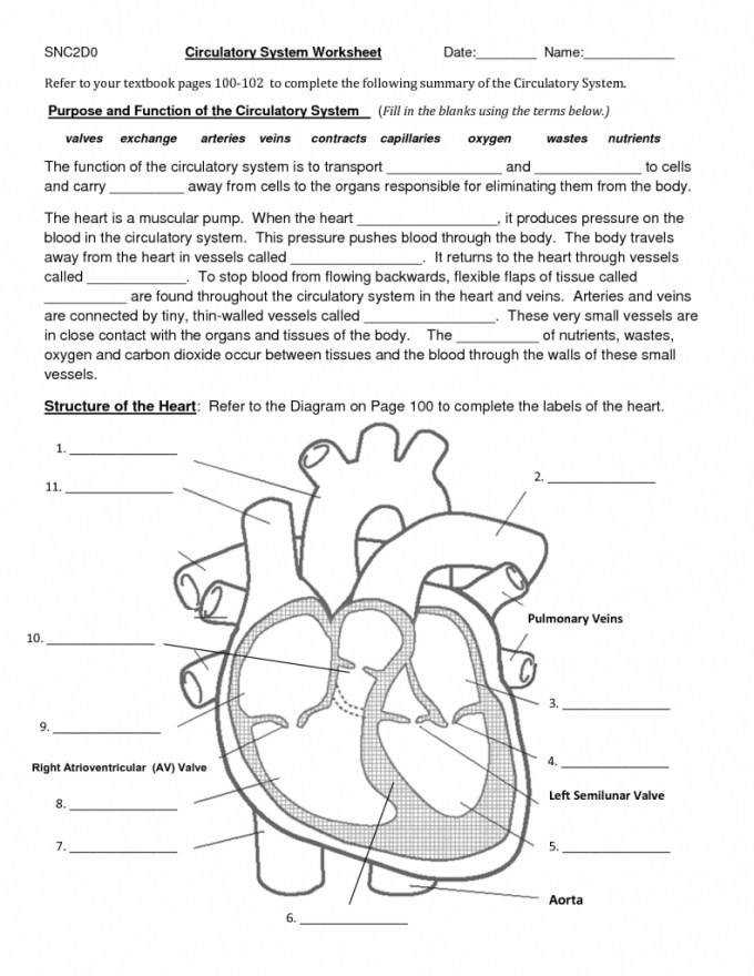 Cow Eye Dissection Worksheet Answers Biology Corner Hairsstyles Co