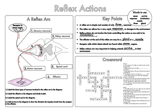 GCSE worksheets on the Nervous System by beckystoke Teaching Resources Tes