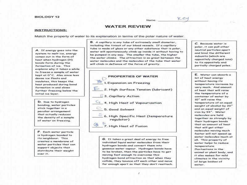 Worksheet Biomolecules Worksheet Luizah Worksheet And Essay Site