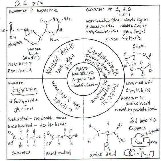 Biomolecule Review Chart Monosaccharide Fat Phospholipids