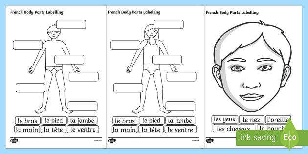 French Body Parts Labelling Worksheet French Body Part Label