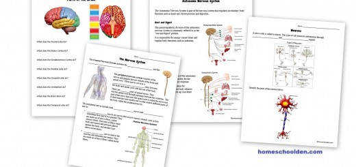Nervous System Worksheets Free