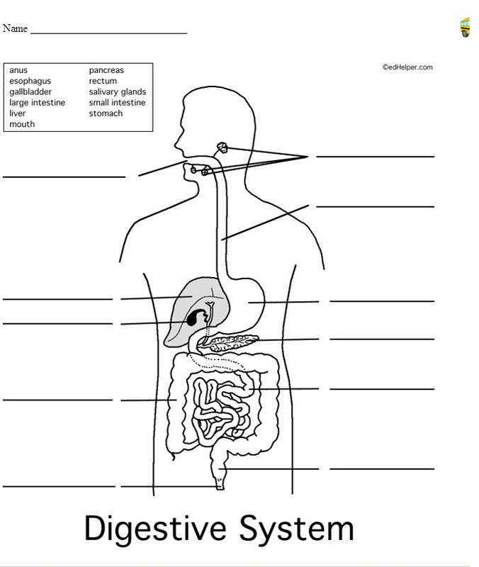 Body Systems Worksheets Homeschooldressage Com