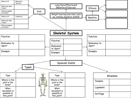 Edexcel GCSE PE Body Systems Worksheets by Mitchbradley005 Teaching Resources Tes