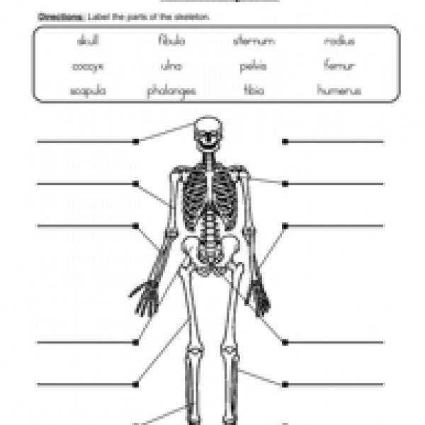 skeletal system worksheet 2