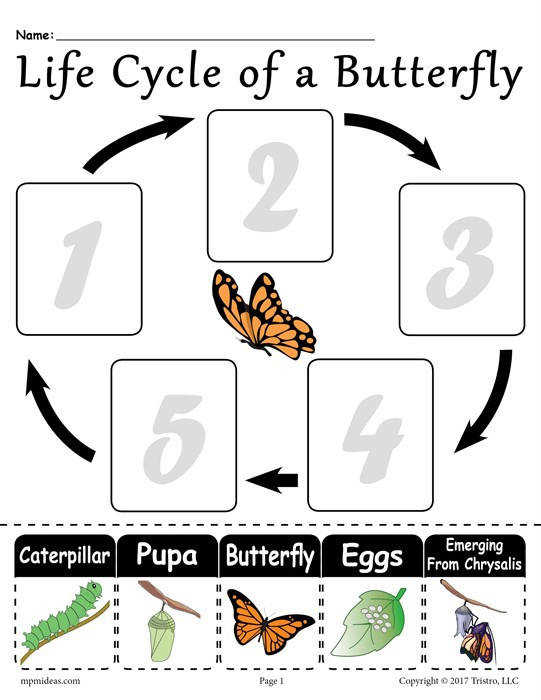 Free Life Cycle of a Butterfly Worksheet