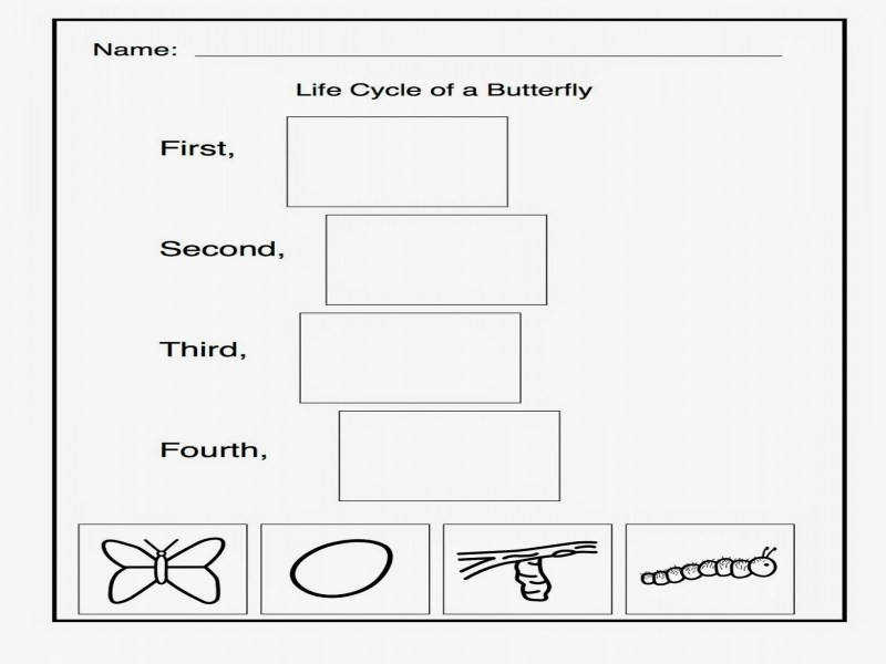 Worksheet Butterfly Life Cycle Printables Wosenly Free Worksheet