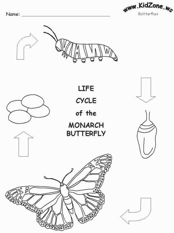 Butterfly Life Cycle Worksheet inside Butterfly Life Cycle Coloring Pages
