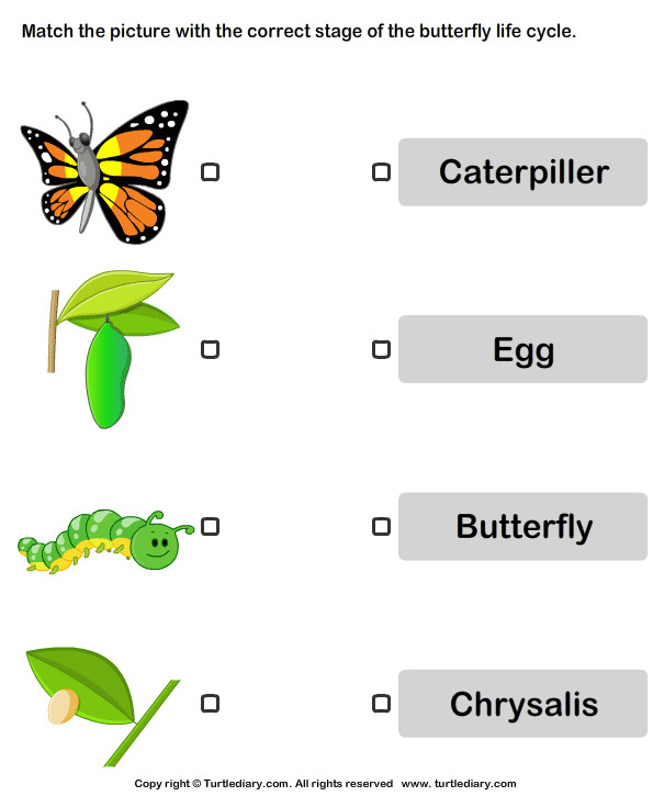 Butterfly Life Cycle Match with Correct Name