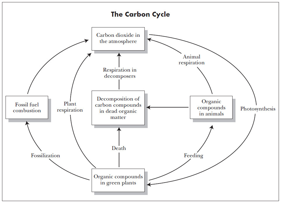 Nutrients The Carbon Cycle Worksheet by harwooda Teaching