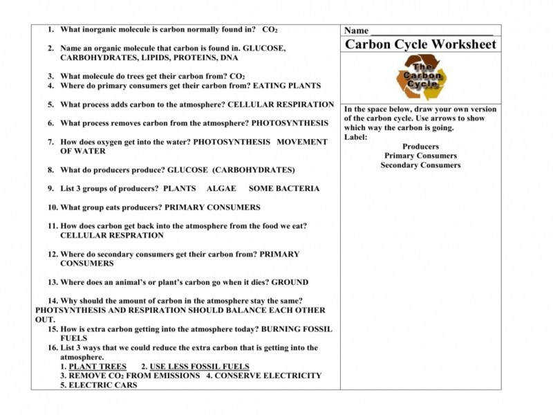 Carbon Cycle Worksheet Homeschooldressage Com