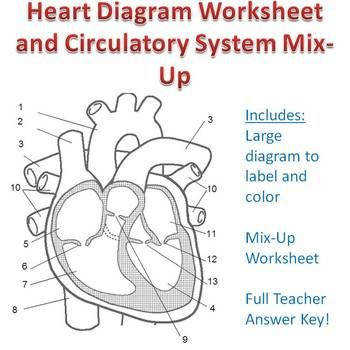 20 best cardio system images on Pinterest