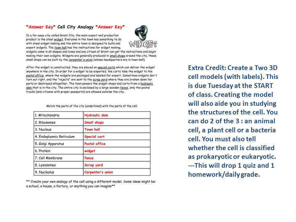 Cell City Analogy Worksheet Homeschooldressage Com