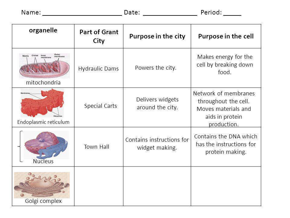 organelle Part of Grant City Purpose in the cityPurpose in the cell mitochondria Endoplasmic reticulum Nucleus