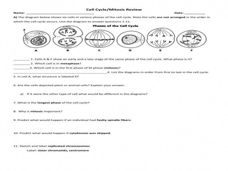 The Cell Cycle Worksheet – Manhasset Public Schools