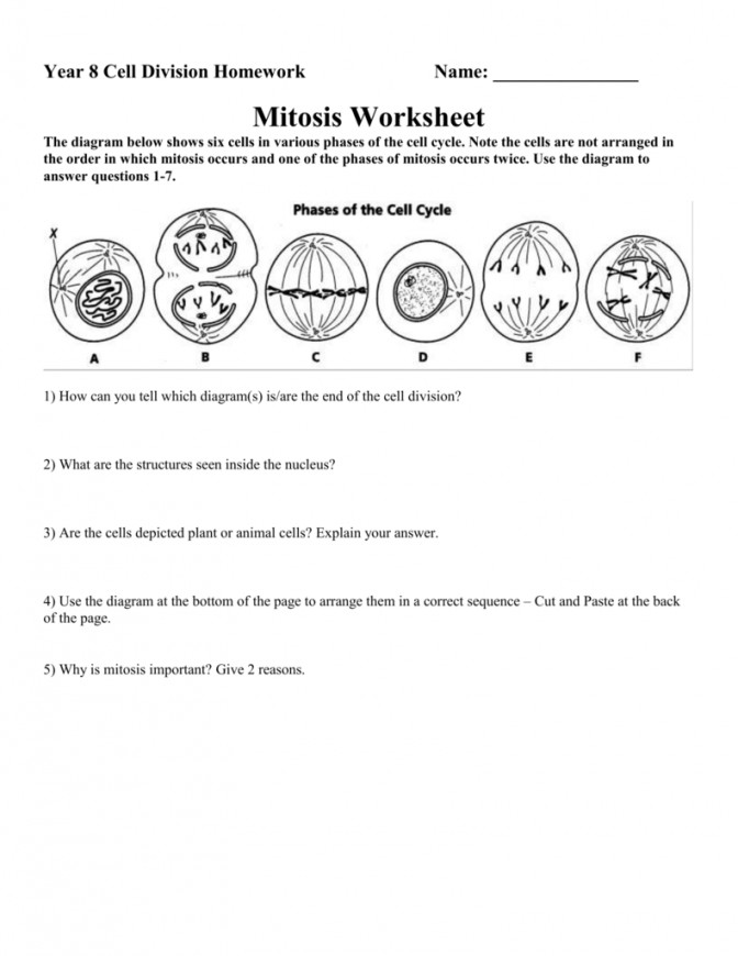 Mitosis Worksheet Cell Division And Cytokinesis Answers 1 5fe6d04cff67c823e ed6d Cell Division And Mitosis Worksheet Worksheet
