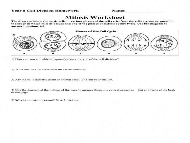 mitosis worksheet - Mitosis Worksheet Answers