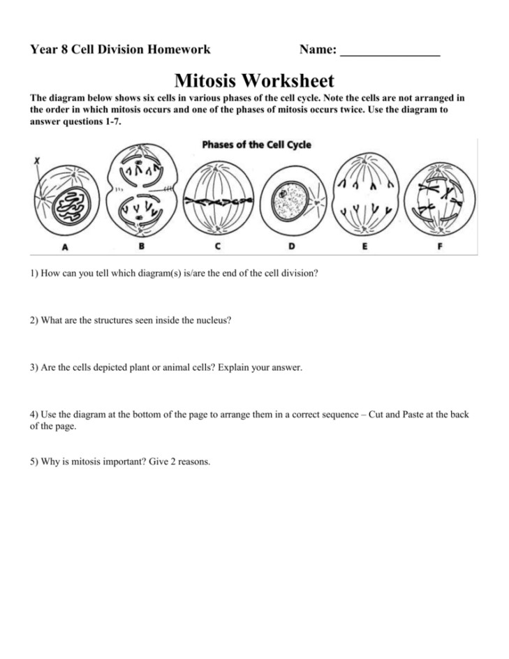 Medium Size of Worksheet phases Mitosis Worksheet Answers Cell Cycle Review Answer Key Cell