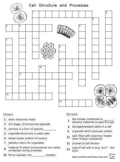 This worksheet packet covers cells mitosis and other cytology topics There are six worksheets appropriate for middle school high school