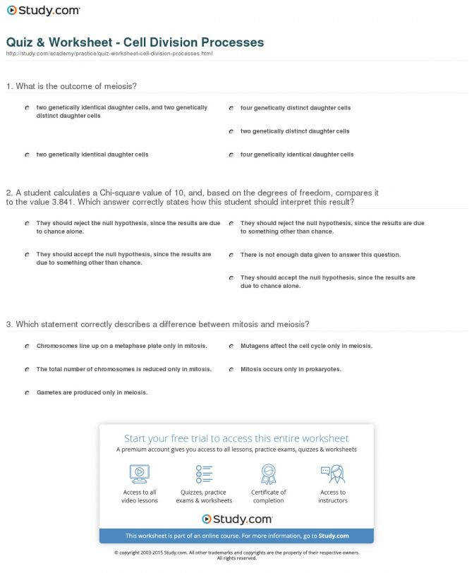 Quiz Worksheet Cell Division Processes Study And Mitosis An Cell Division And Mitosis Worksheet Worksheet