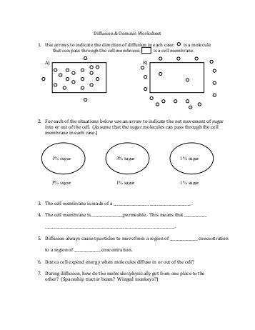 Diffusion And Osmosis Worksheet Free Worksheets Library Download