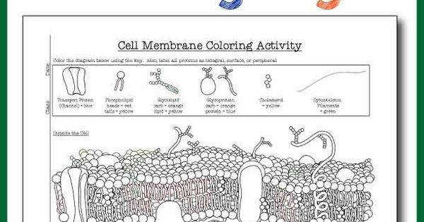 Cell Membrane Coloring Worksheet Answer Key Biology Junction