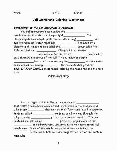 Answer Sheet Eliolera Cell Membrane Coloring Worksheet Beautiful Cell Membrane Coloring Worksheet 7th 9th Grade Worksheet