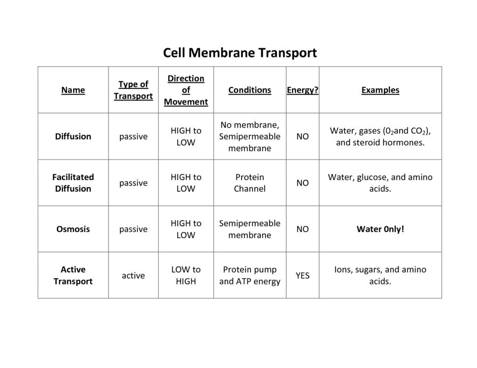 Worksheet Cell Membrane Worksheet Answers Osmosis Is What Type Transport Membrane Structure Answer Key