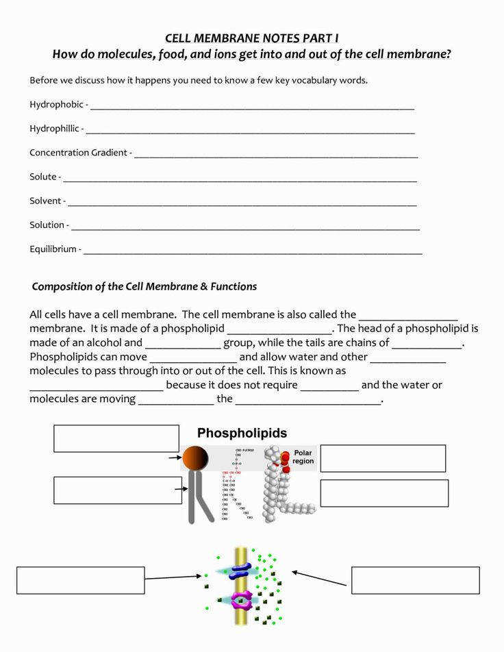 Cell Membrane Coloring Sheet Coloring Pages Pinterest