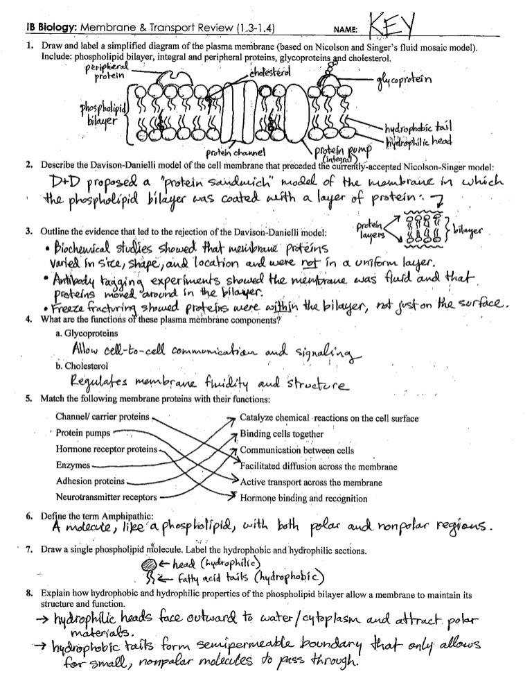 Cell Membrane Coloring Worksheet 7 2 Templates and Worksheets