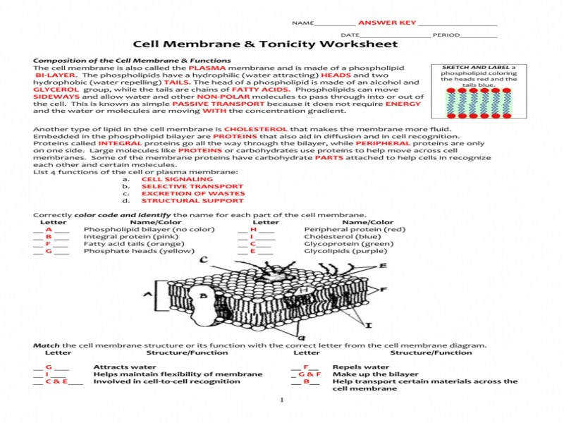 Cell Membrane & Tonicity Worksheet