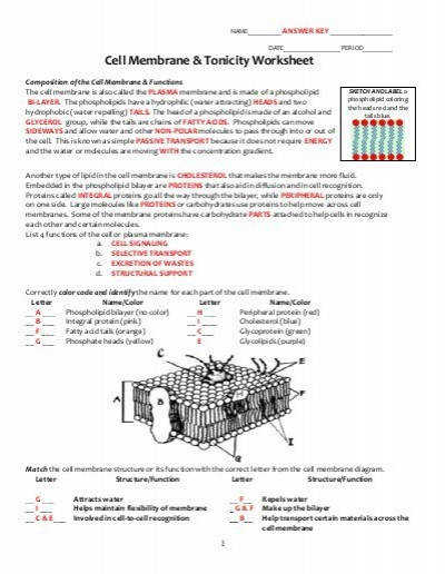 Cell Membrane Coloring Worksheet Answers Templates and Worksheets