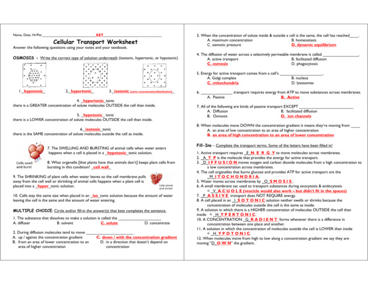 26 Transport Across Cell Membrane Worksheet - Worksheet ...